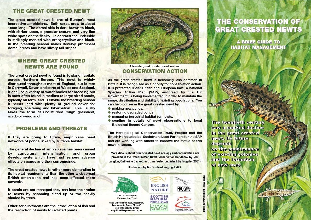 Great Crested Newt Management Leaflet