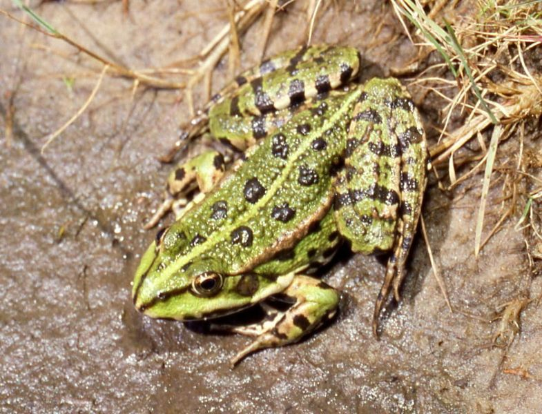 Image Result For Amphibian And Reptile