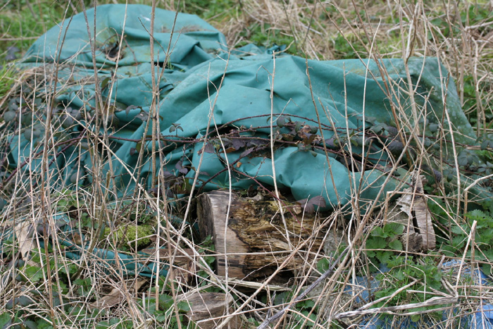 This tarpaulin-covered pile of logs is an active Adder hibernacula on a working dairy farm.