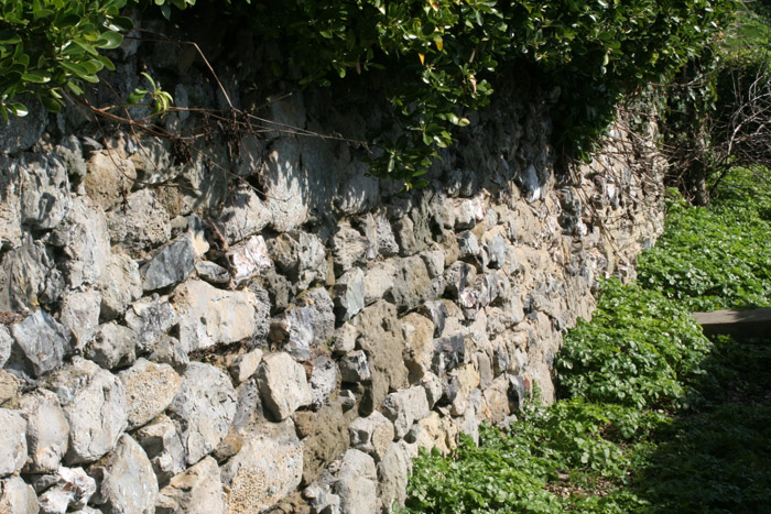 Partially vegetated walls within the town of Ventnor (Isle of Wight) provide shelter and food.
